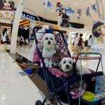 Dog lover in The Mall Bangkapi Thailand