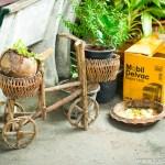 Bamboo Bike and Coconut Vase