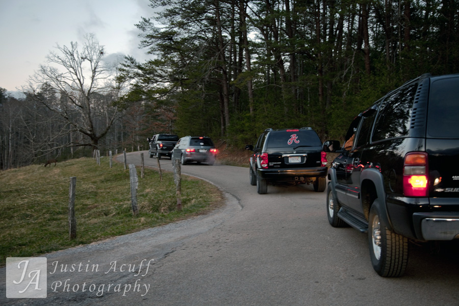 A deer jam occurs when motorists on the Cades Cove Loop road stop in the middle of the road instead of using one of the numerous pull off areas available.