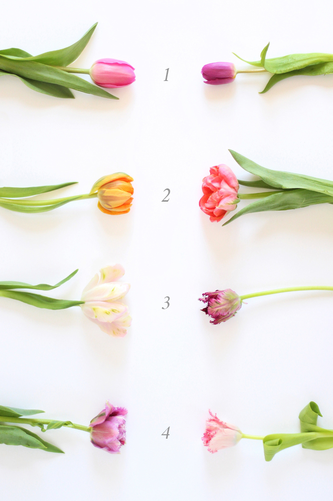 All About Tulips | How to Identify Different Tulip Varities // JustineCelina.com