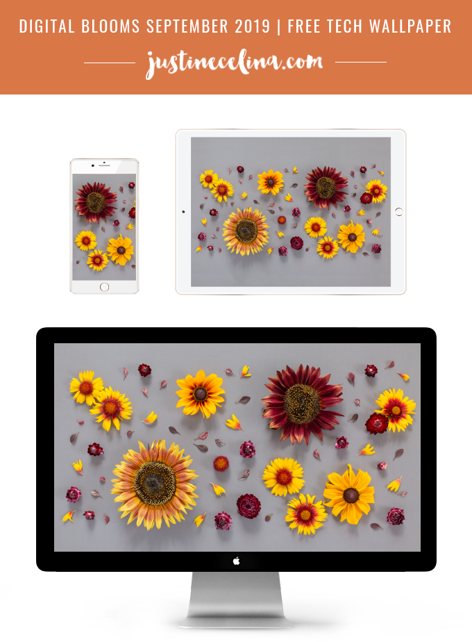 DIGITAL BLOOMS SEPTEMBER 2019   FREE DESKTOP WALLPAPER   Free Summer / Fall 2019 Floral Desktop Wallpapers featuring Chianti and Little Becka Sunflowers, Rudbeckia,Strawflower, wild Firewheels and Barberry leaves on a moody grey background   Free Sunflower Floral Wallpapers for Summer and Autumn   Summer / Fall 2019 Tech Wallpapers   FREE Autumn Floral Wallpapers   The Best FREE Fall/Autumn Tech Wallpapers   Free Floral Tech Wallpapers Fall 2019 // JustineCelina.com