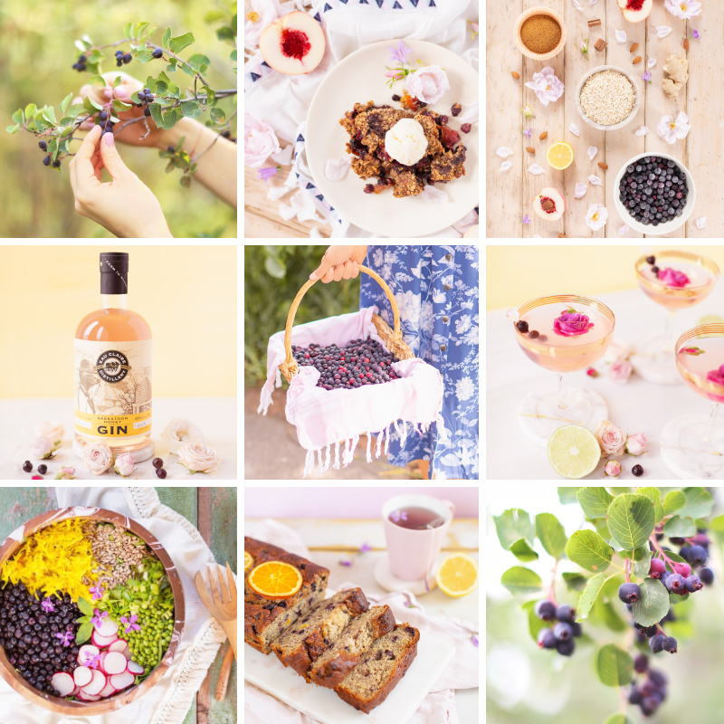 4 Healthy Saskatoon Berry Recipes to Try This Summer + Where to Pick Saskatoons in Alberta | Vegan Gingered Saskatoon Peach Crumble | Wild Saskatoon Berry Crumble | Honeyed Saskatoon Cherry Gimlet | Summer Bounty Salad with Saskatoon Cider Vinaigrette | Gluten Free Saskatoon Citrus Banana Bread | Plant Based Serviceberry and Prairie Berry Recipes | Dairy Free, Gluten Free and Refined Sugar Saskatoon Recipes | Calgary Lifestyle and Food Blogger // JustineCelina.com