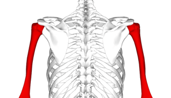 Clavicle Fracture (Broken Collarbone): Motorcycle, Car Accident