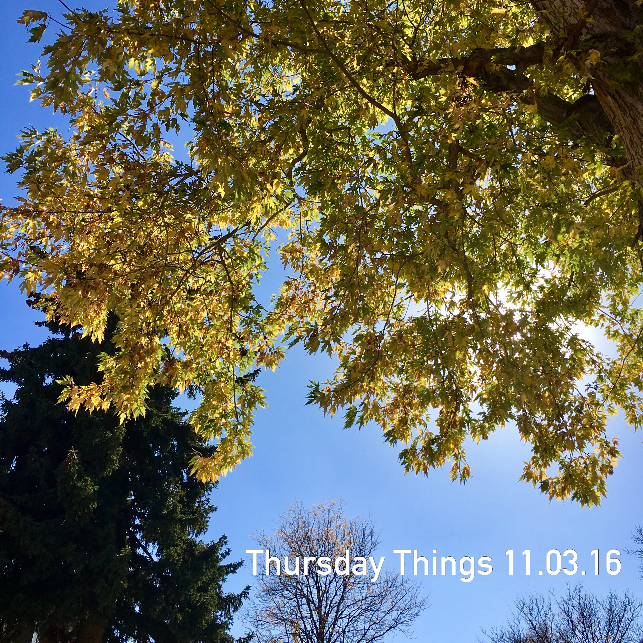 thursday things 11.03.16