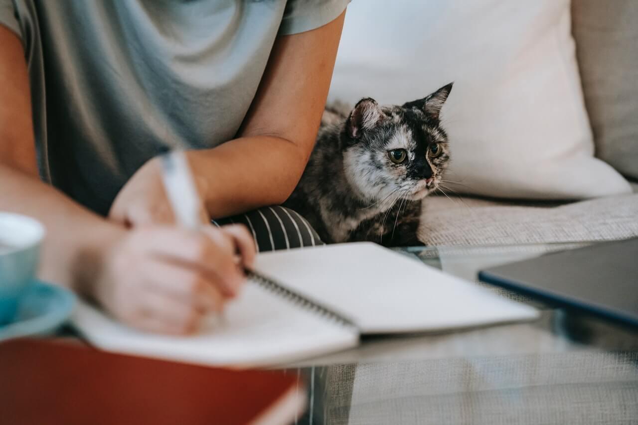 kat adopteren