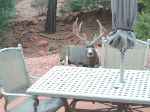 """On priorities: Our friend """"Buck"""" stops here"""