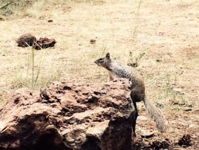 08-10-2015_Squirrel
