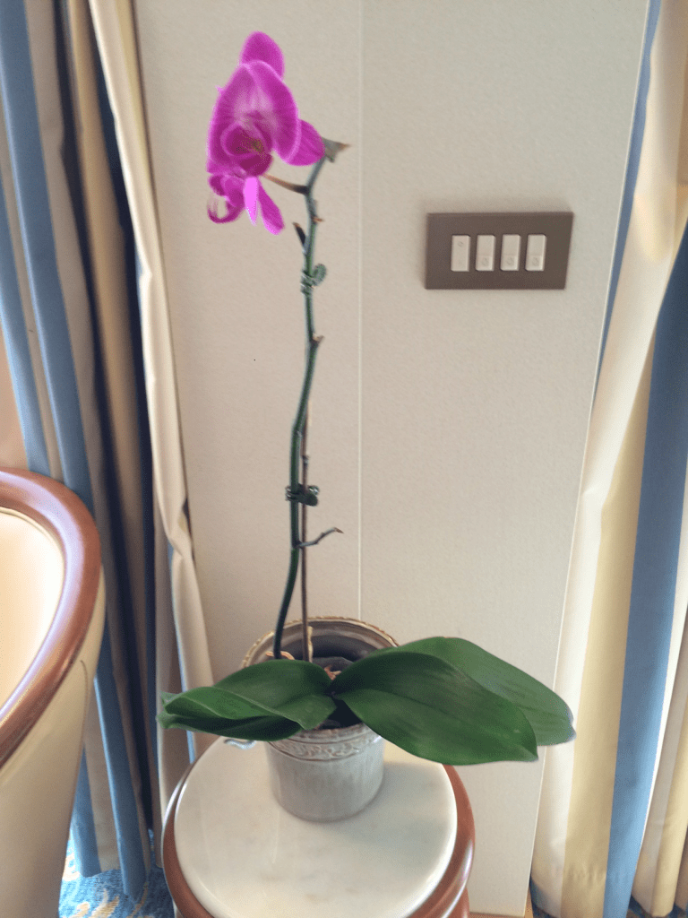 03-03-2016_Live Orchid