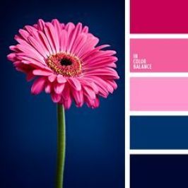 pink and blue color scheme