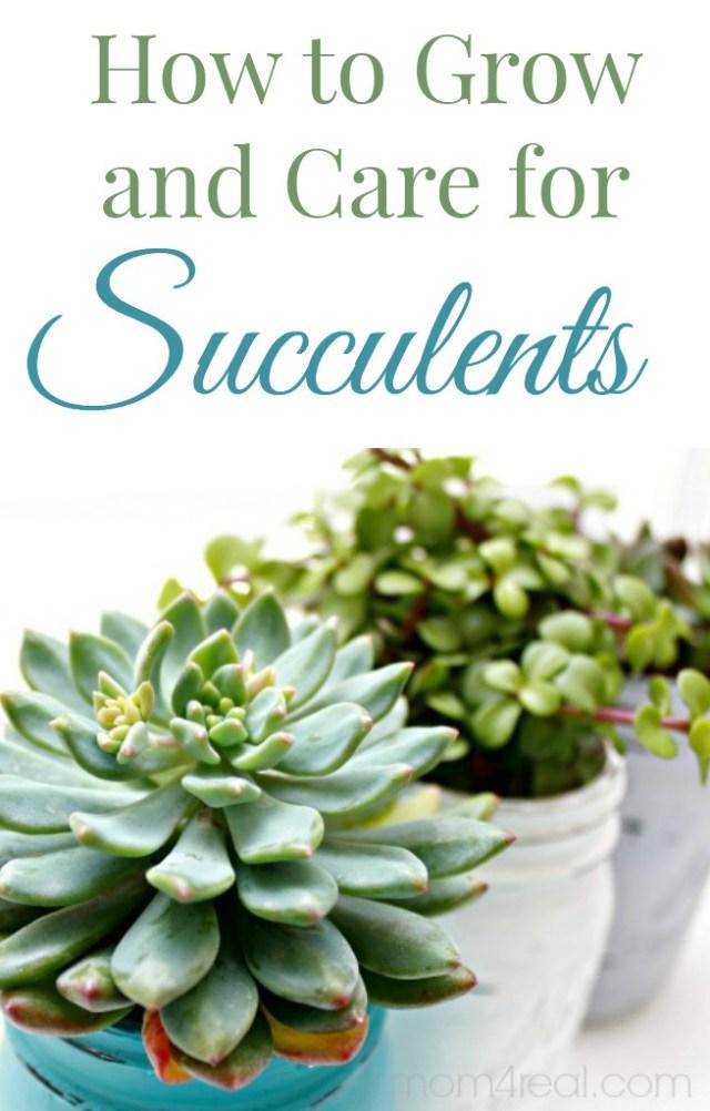 29 Amazing Succulent Planting Ideas