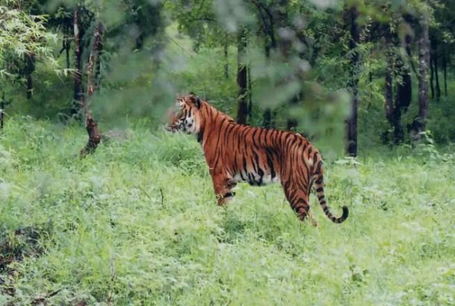 Wildlife of Karnataka