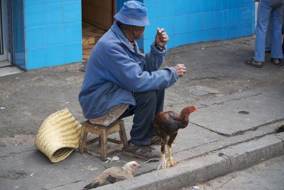 Dit kun je in Nederland niet voorstellen: kippen die vrij rondlopen op de stoep in de hoofstad.