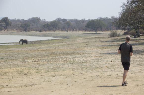 Onze eerste olifant in Vwaza