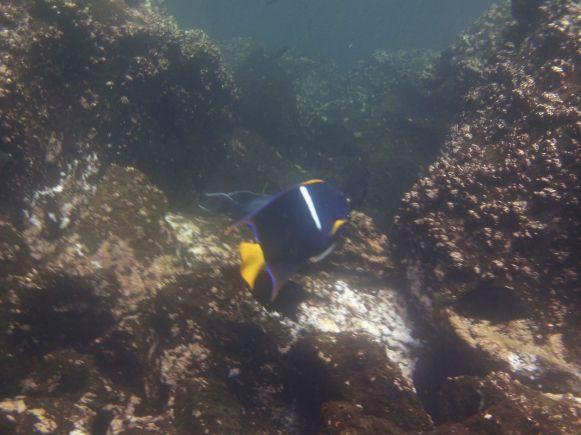 snorkelen Genovesa