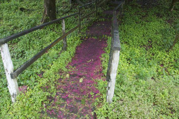 zo mooi hoe het paadje roze/paars kleurt door de gevallen bloemblaadjes