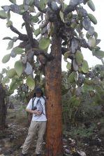 enorme cactusboom