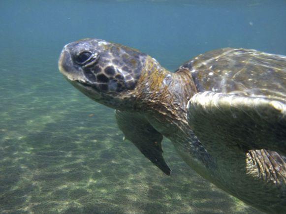 zeeschildpad, Isla Santiago