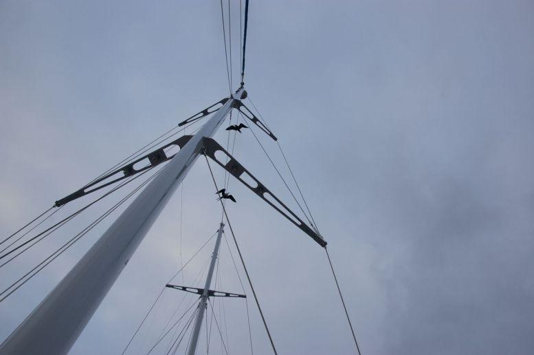 Fregatvogels reizen gezellig mee met de boot. Hun vleugels rijmen mooi met de lijnen van de boot.