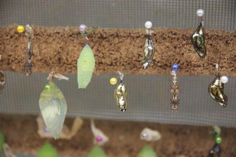 De poppen zijn af en toe net prachtige juwelen, ze lijken wel gemaakt van goud, zilver en edelstenen.
