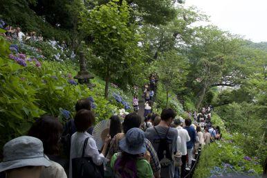De hortensia's zijn een trekker bij deze tempel. Het is echt file lopen na eerst een lange wachttijd.