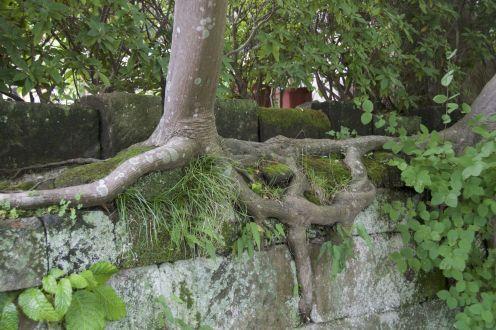 Verbazingwekken waar bomen zich aan kunnen hechten.