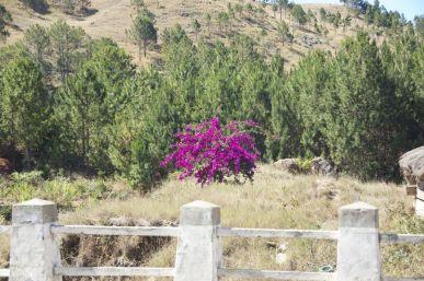 Bougainvillea zorgt op veel plekken voor prachtige kleuren in het vaak dorre landschap.