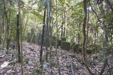 Begraafplaats in het bos.