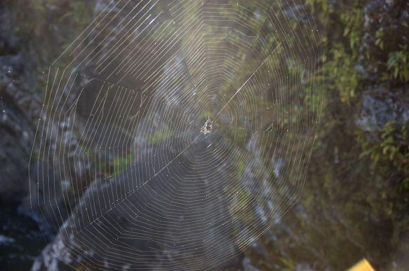 En ook vandaag weer enorme spinnenwebben.