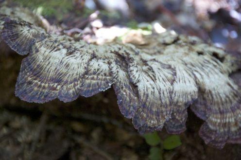 Prachtige paddenstoelen.