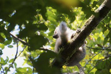 Zoveel soorten lemuren, en ik weet ze maar zelden uit elkaar te houden, maar allemaal zo schattig!