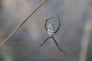 En dan zie je dat je bijna met je rug in het web van een giga-grote spin zit...