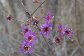 Leuke bloemetjes! Geen idee wat het zijn.
