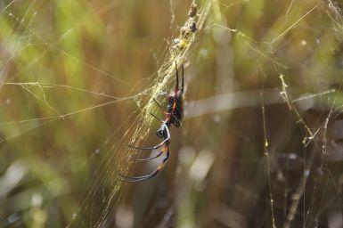 Ook hier weer hele grote spinnen