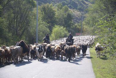 Dit is het soort verkeersopstopping waar we deze vakantie ook vaak mee te maken hebben.