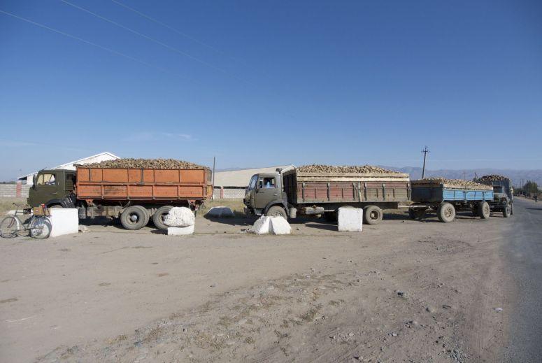 Een enorme rij vrachtauto's komt (denk ik) suikerbieten afleveren om verder per trein vervoerd te gaan worden.