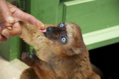 Hoe blauw kunnen ogen zijn!