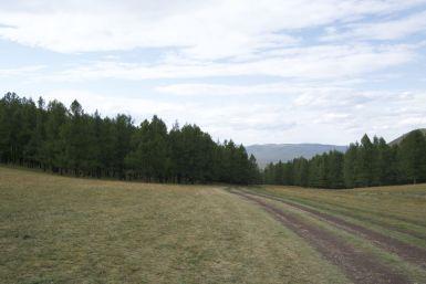 We rijden zowaar door een stukje bos! Net als er wolken zijn en we dus geen schaduw nodig hebben.