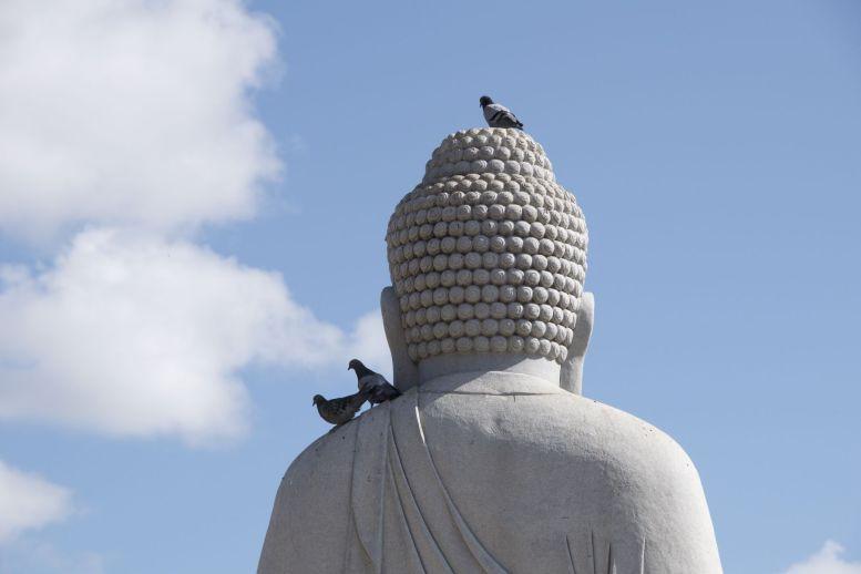 Boeddha en de duiven.