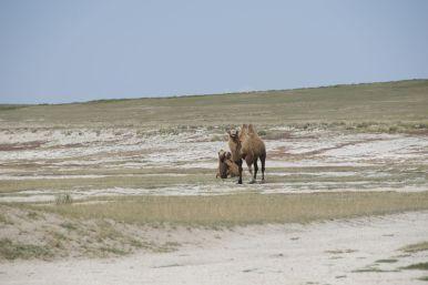 Hallo Kamelen!