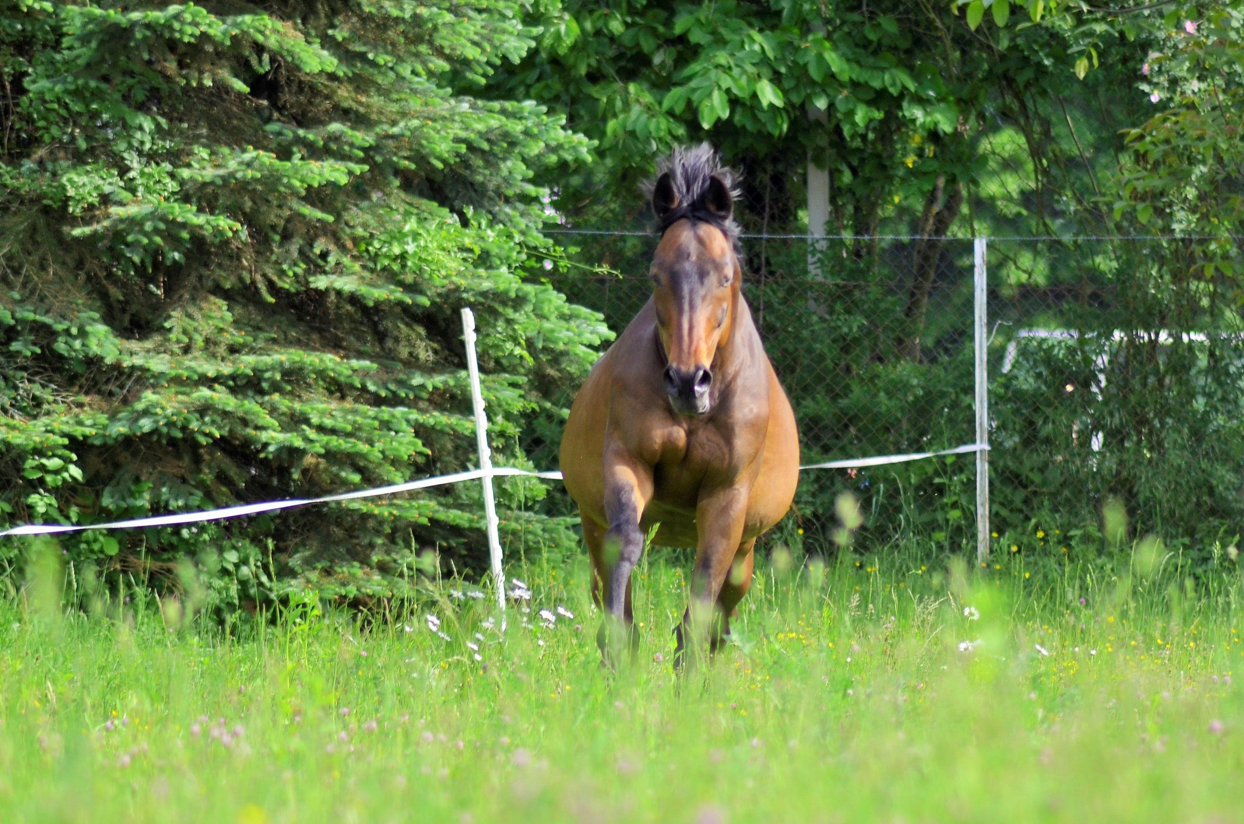 Pferdegestütztes Coaching mit Vollblütern