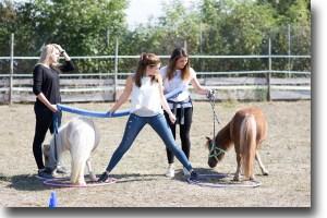 Pferdegestütztes Coaching in Freiburg in Breisgau