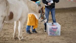 Pferdegestütztes Coaching in Freiburg