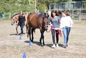 Pferdegestütztes Coaching Freiburg im Breisgau