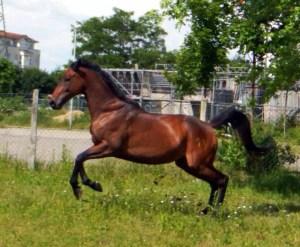 Pferd von Jutta Einhaus Pferdegestützter Coach