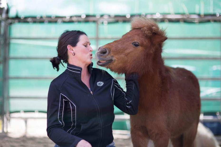 Pferdegestütztes Coaching I Shettys
