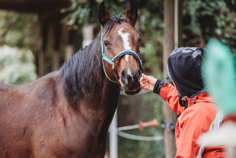 Arbeit mit Pferden I Freiburg