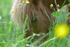 Pferdegestütztes Coaching I Deutschland