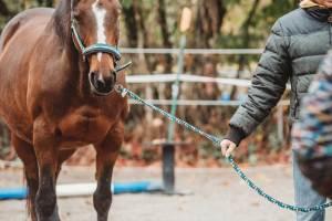 Pferdegestütztes Coaching I Arbeit mit Pferden