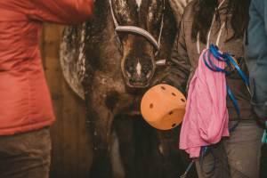 Ausbildung I pferdegestütztes Coaching