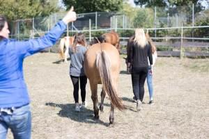 Coaching mit Pferden I Deutschland